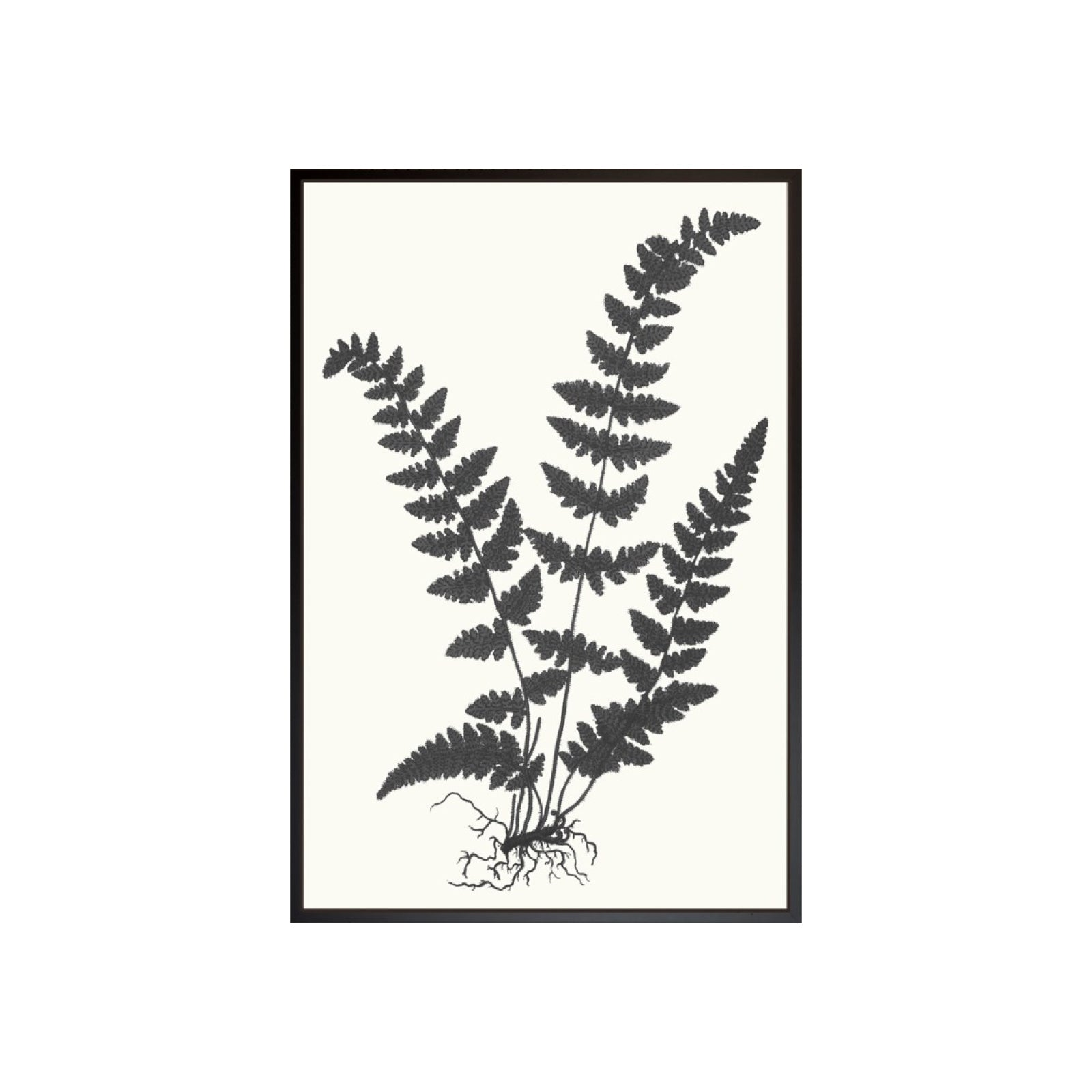 Black and Natural Fern Print I