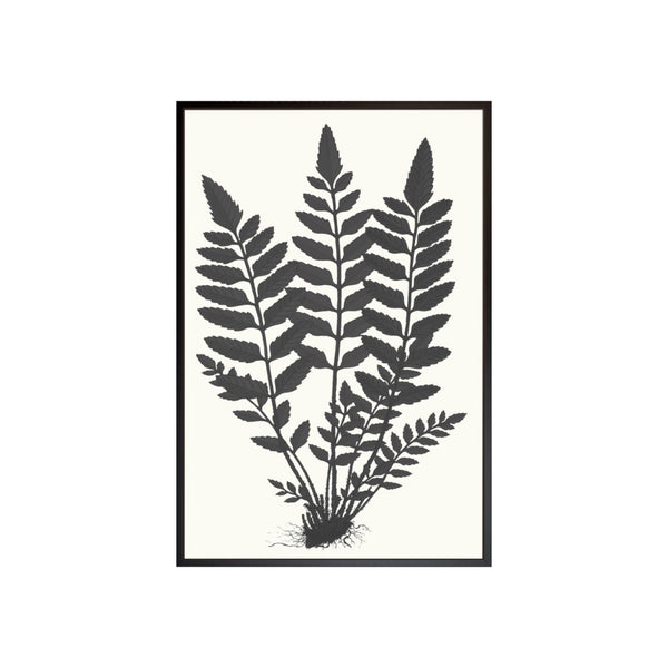 Black and Natural Fern Print II
