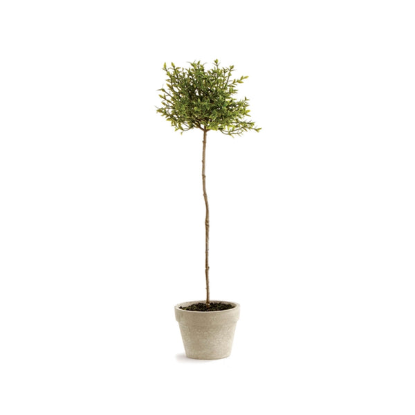 Thyme Topiary - Medium