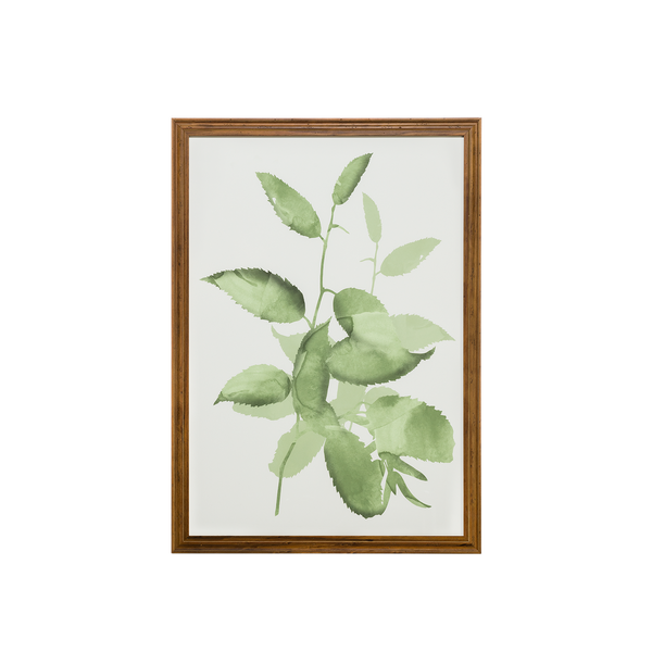 Watercolor Botanical III