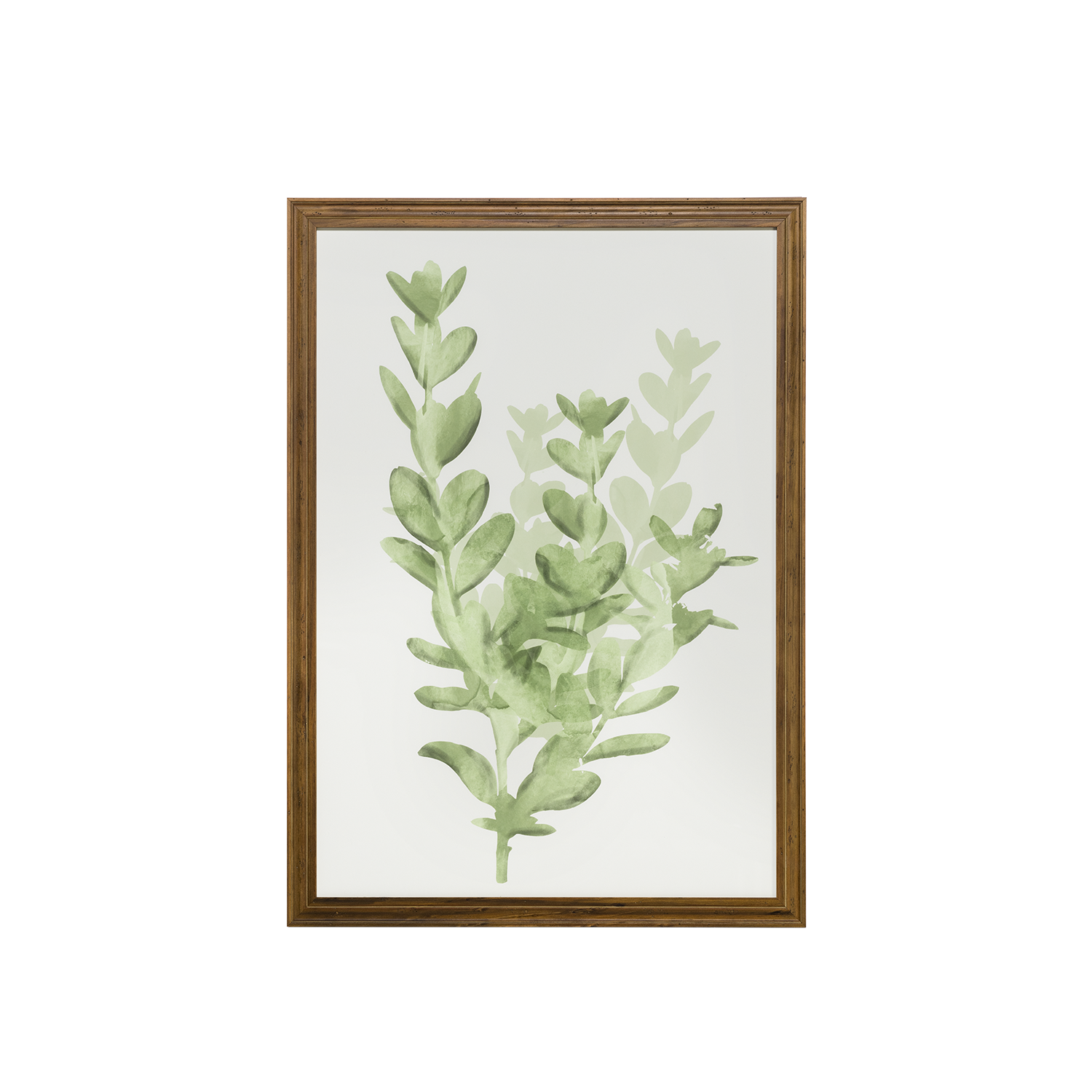 Watercolor Botanical IV