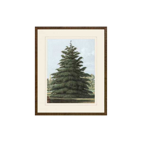 Happy Pine Print II