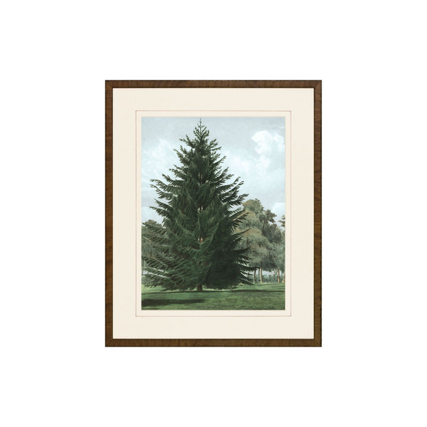 Happy Pine Print IV