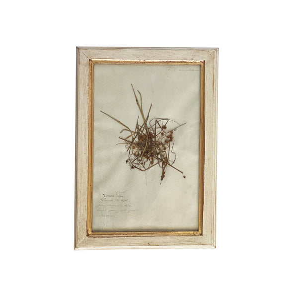 Vintage French Botanical I
