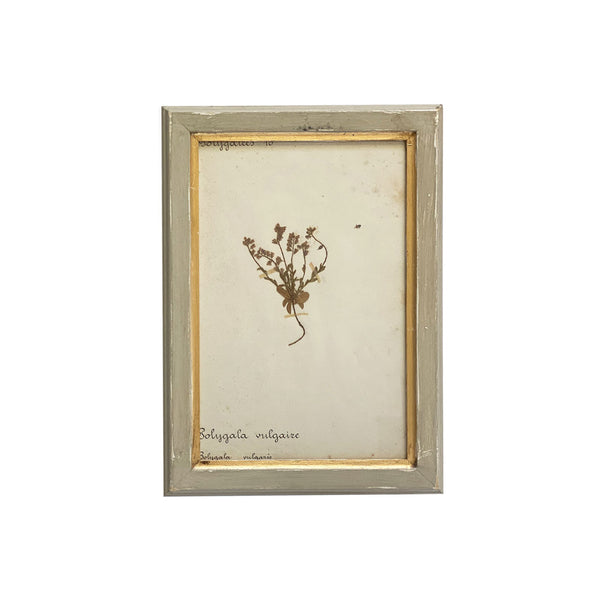 Vintage French Botanical VI