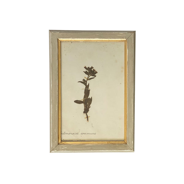 Vintage French Botanical V