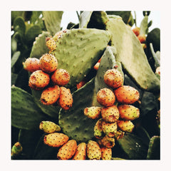 Prickly Pear Seed Oil: A Hidden Treasure With Endless Beauty Benefits