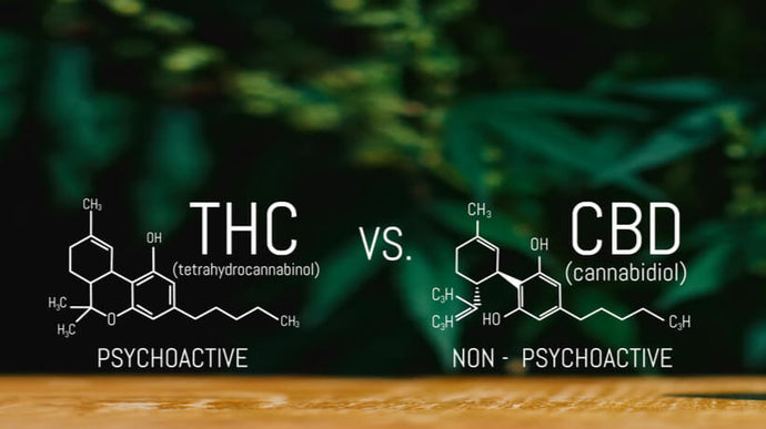 CBD VS THC - Difference Between THC vs CBD oil