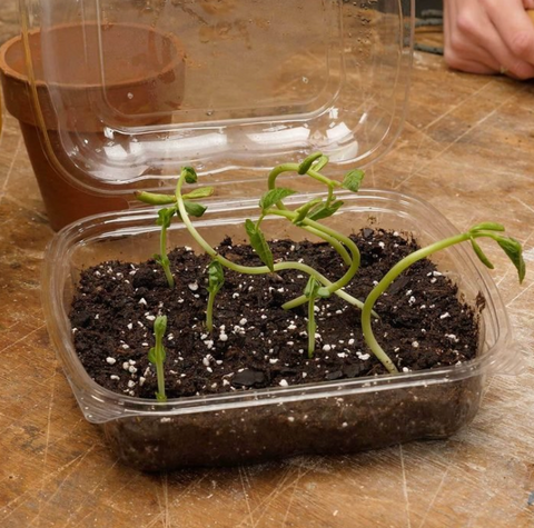 re use plastic container seed garden