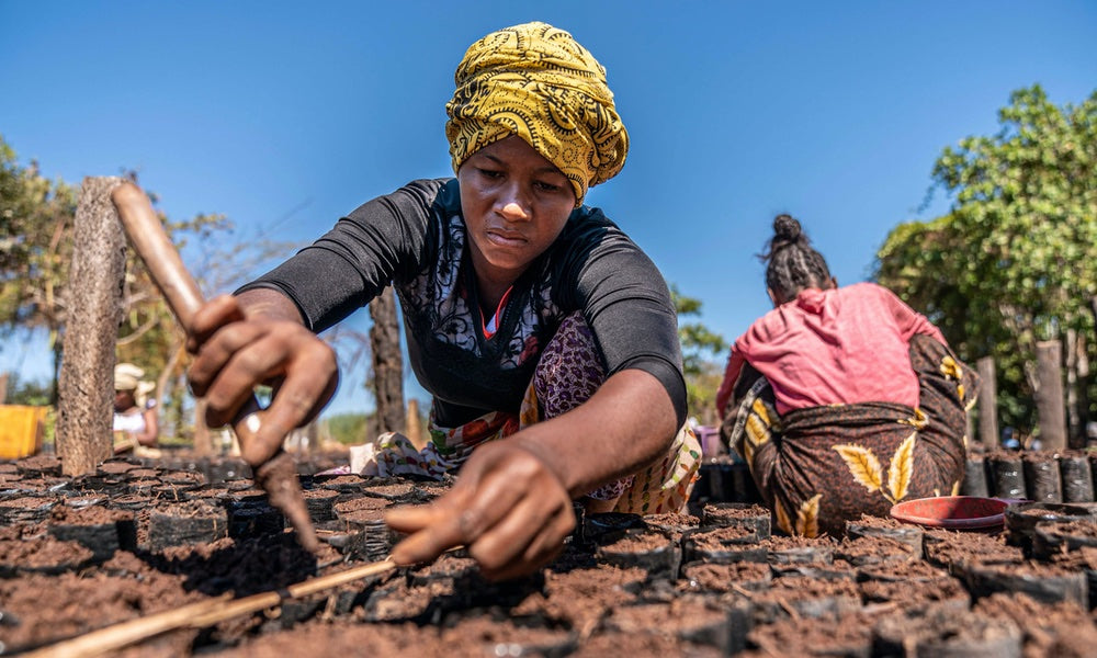 Planting trees in Africa