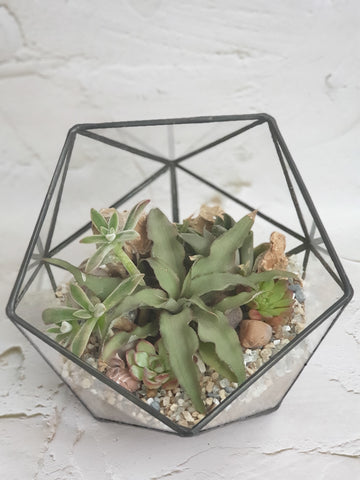 Tiny Greens Glass Terrarium