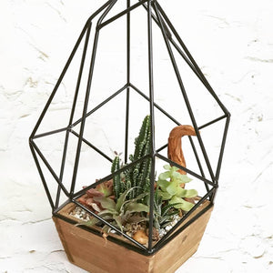 'Indoor Forest' Open Geometric Terrarium