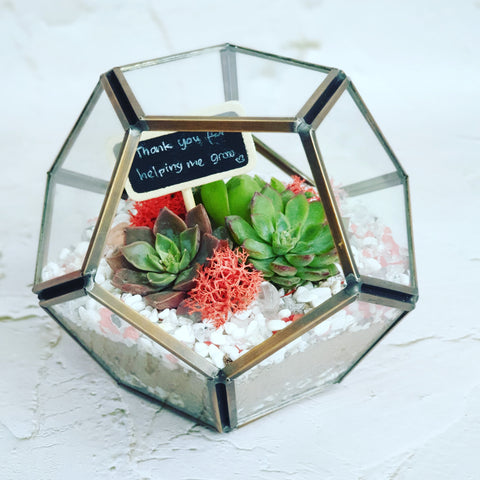 Mini geometric terrarium
