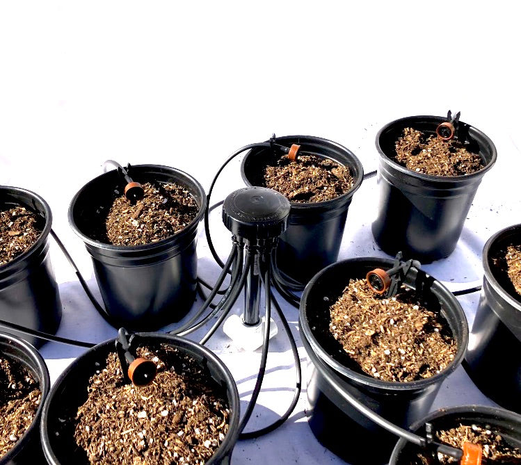 12 Plant Drip Irrigation Home Grow Kit