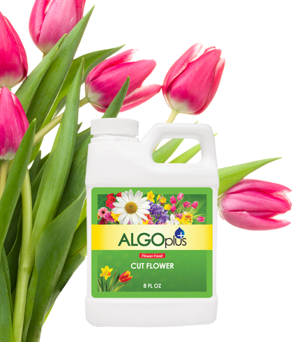Cut Flower Food - Longer Life for Cut Flower Arrangements 250ml - Algoplus