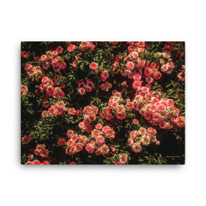 "Rose Garden Canvas (18""x24"")"