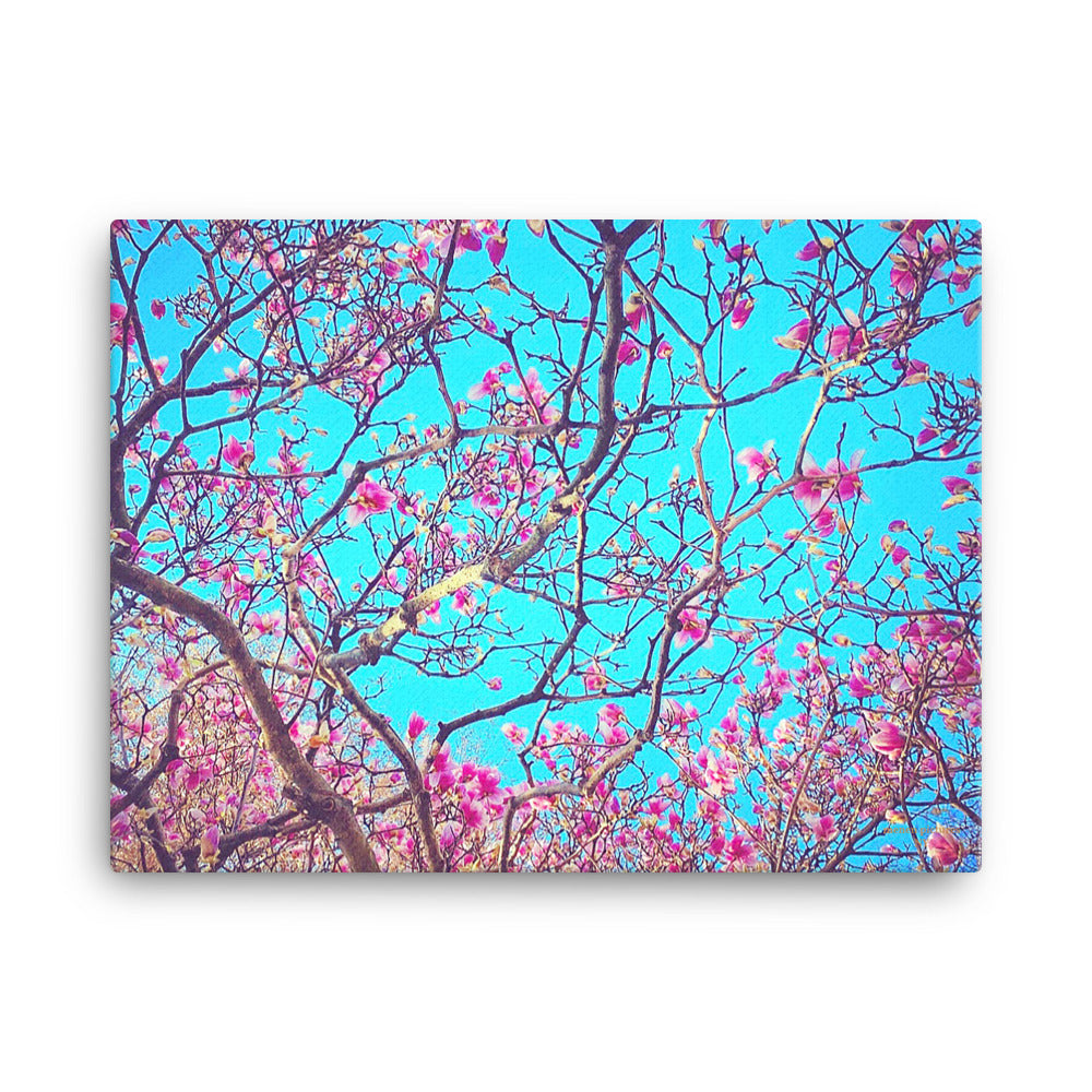 Pink Magnolias Canvas (18