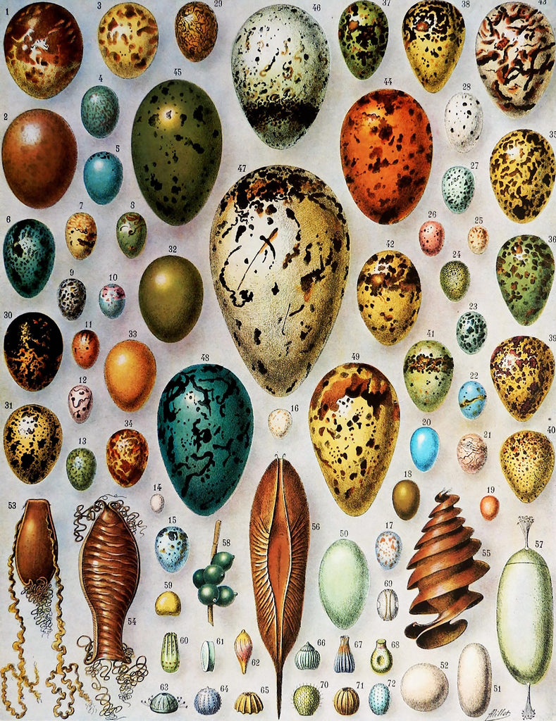 Bird Eggs (258 Piece Wooden Jigsaw Puzzle)