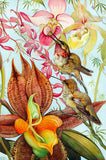 Birds & Orchids (47 Pieces) Mini Wooden Puzzle