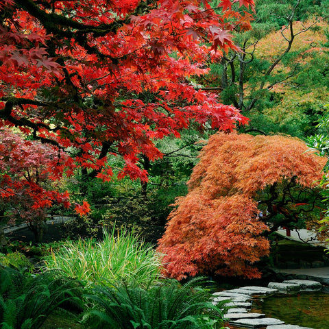 Butchart Gardens in Fall (190 Piece Wooden Jigsaw Puzzle)