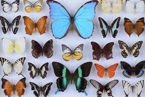 Butterfly Collection (77 Pieces) Mini Wooden Photo Puzzle