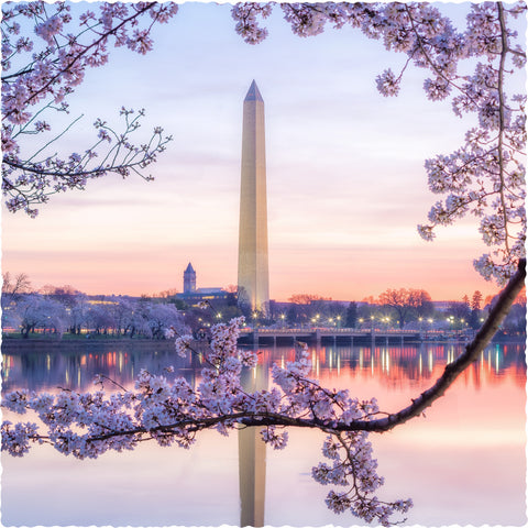 D.C. Cherry Blossoms (325 Piece Wooden Jigsaw Puzzle)