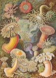 Sea Anemones by Ernst Haeckel - 288 Piece Wooden Jigsaw Puzzle