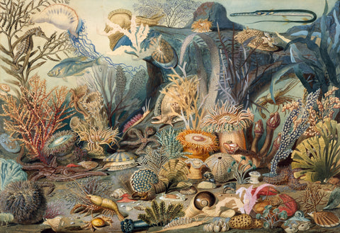 Ocean Life by James M. Sommerville (475 Piece Ocean Wooden Jigsaw Puzzle)
