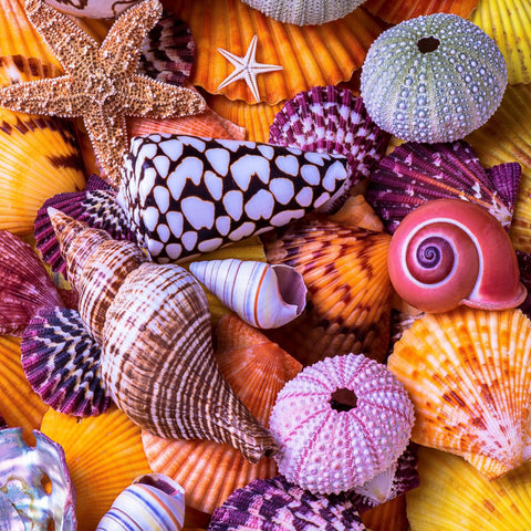 Ocean Treasures (145 Piece Wooden Jigsaw Puzzle)