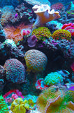 Coral Reef (51 Piece Mini Wooden Jigsaw Puzzle)