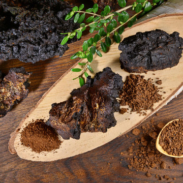 What Is The Chaga Mushroom Good For?