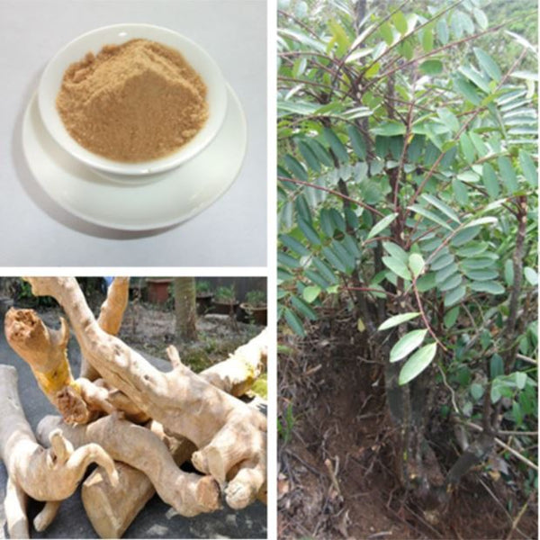 different forms of indonesian ginseng