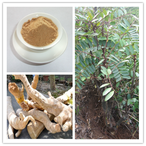 Image of Indonesian Ginseng 200:1 Extract 100 Capsules