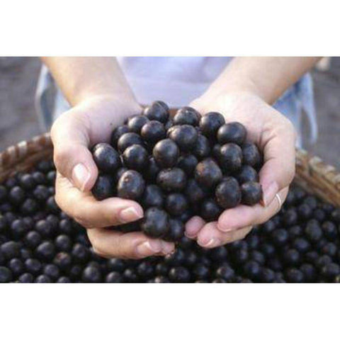 Image of Acai Berry 10:1 Organic Extract Powder