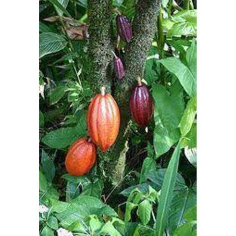 Image of Cacao Nibs