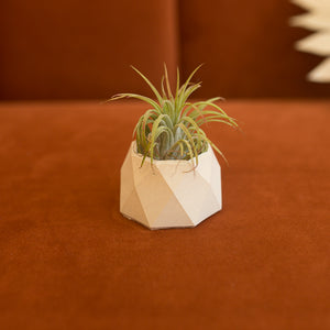 mini geometric concrete planter in barely beige
