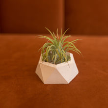 Load image into Gallery viewer, mini hexagonal concrete planter in blush