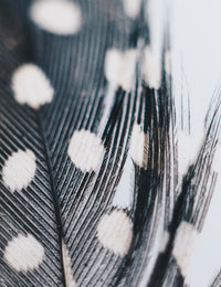 Black and white boho feather