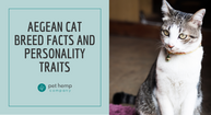 Aegean Cat Breed Facts and Personality traits