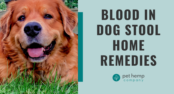 Blood In Dog Stool Home Remedies