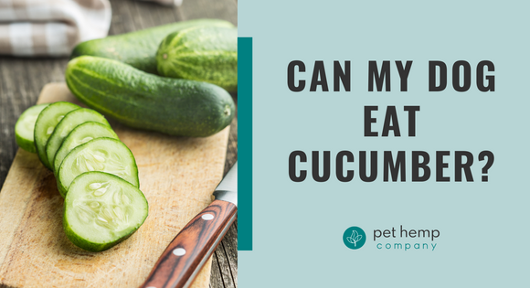 CAN MY DOG EAT CUCUMBER?