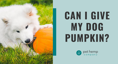 Can I Give My Dog Pumpkin?