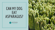 Can My Dog Eat Asparagus