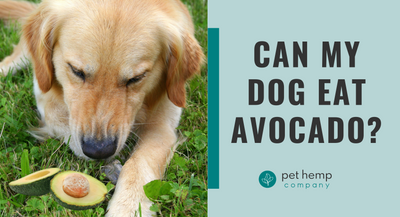 Can My Dog Eat Avocado?