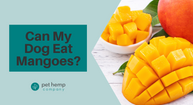 Can My Dog Eat Mangoes?
