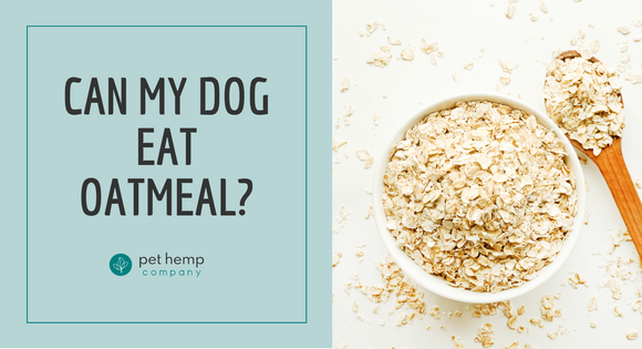 Can My Dog Eat Oatmeal?