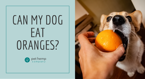 Can My Dog Eat Oranges?