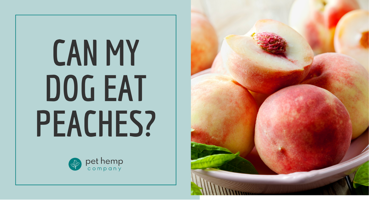 Can My Dog Eat Peaches?