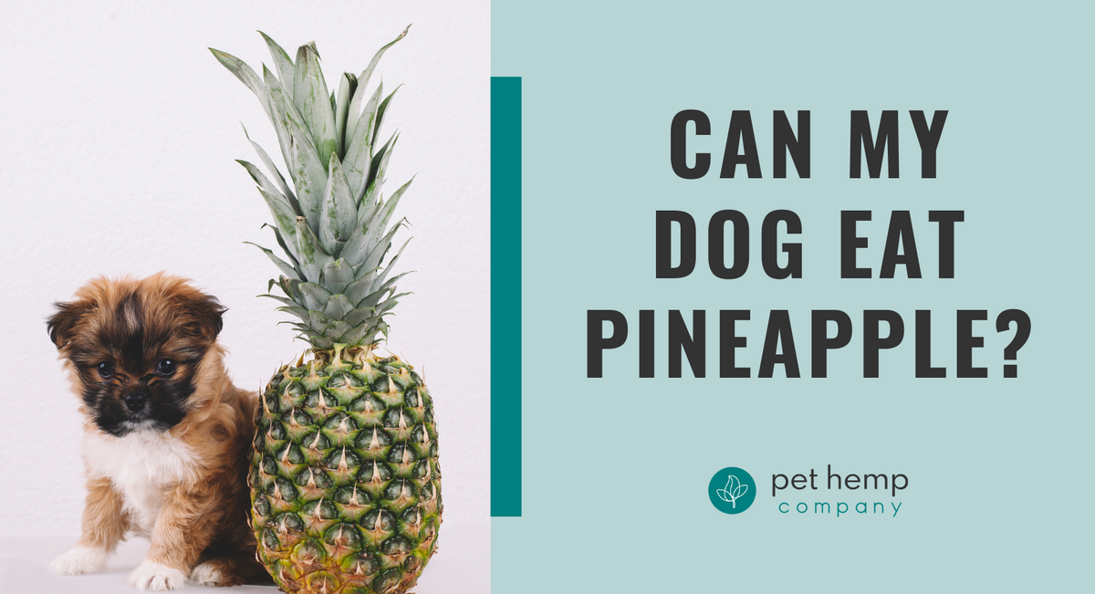 Can My Dog Eat Pineapple?