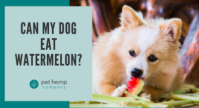 Can My Dog Eat Watermelon?